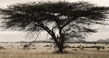 E03 Tree