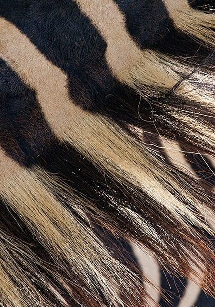 05_zebra-fur_-_SMALL_(436x743)